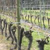 Part pruned row